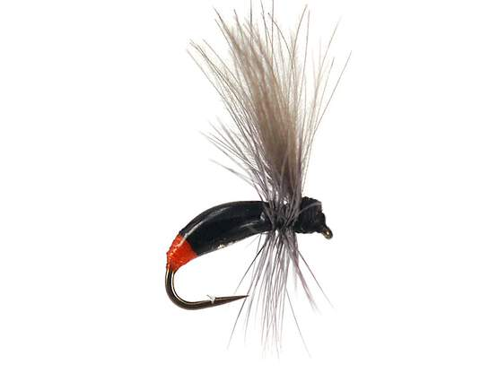 G3 Grayling Ant