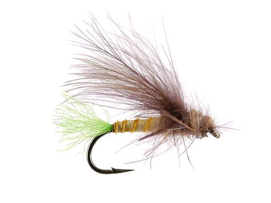G6 Grayling Sedge - Green Tail