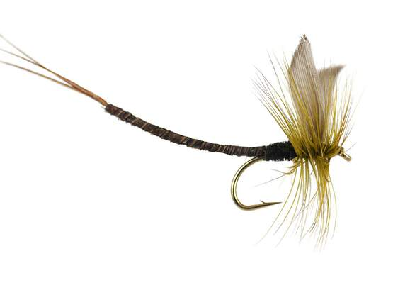 Olive Quill Extended Body Mayfly