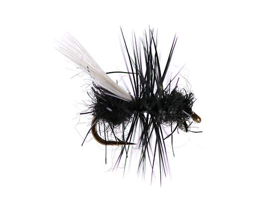 Tangled Winged Black Ant 16