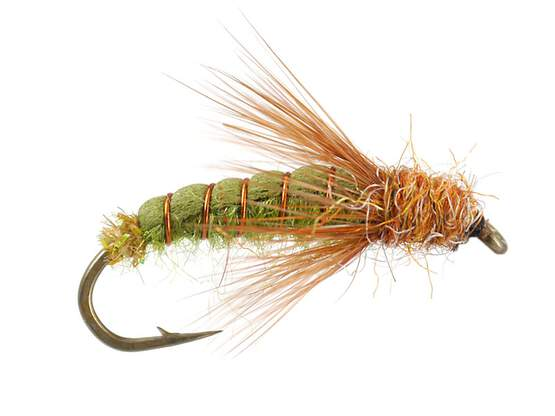 Emerger Sedge Pupa Olive 10